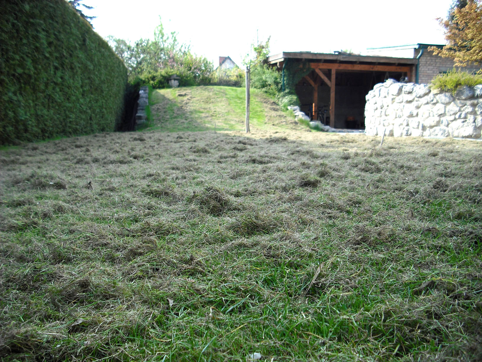 richtige Rasenpflege