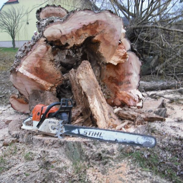 Murlasits Gartengestaltung mit Planung, Ausführung und Pflege - Baumstumpfentfernung
