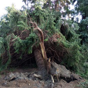 Sturmschäden August 2017