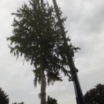 Entfernen eines Problembaumes mittels Mobilkran der Firma Kampel